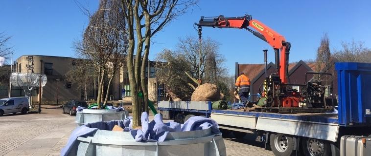 Glinsterende boombakken geplaatst op Raadhuisplein Tubbergen